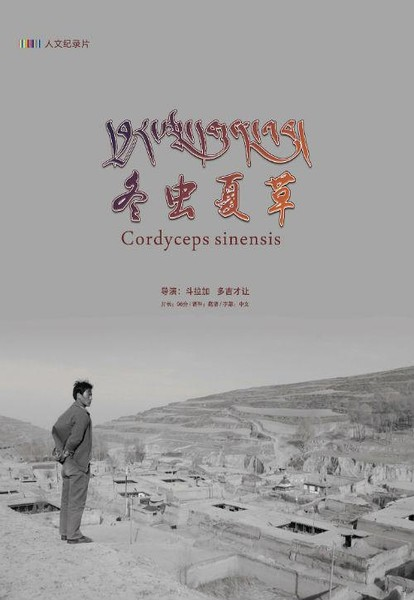 དབྱར་རྩྭ་དགུན་འབུ།  (冬虫夏草 Cordyceps sinensis)